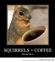 funny-squirrel-drinking-coffee