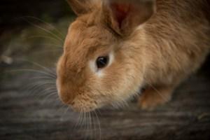ウサギの画像の重さは22KB
