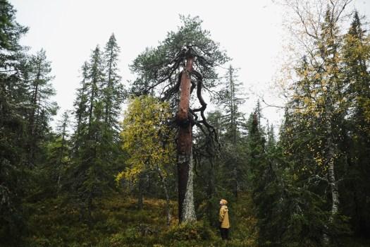 Verdien av skog