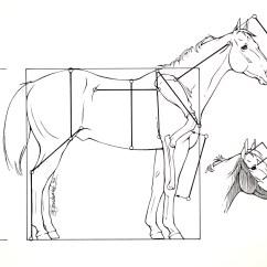 Diagram Parts Of A Horse Power Window Kit Installation Anatomy I Mikki Senkarik