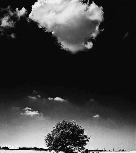 A Cloud Marries Tree1