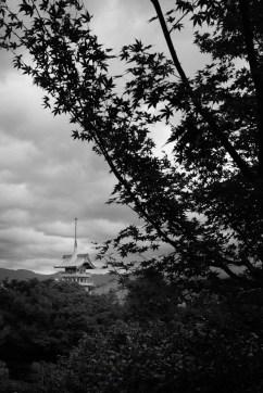 Through The Trees, Kyoto, Japan