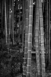 Bamboo Forest, Kodai-ji Temple, Kyoto, Japan