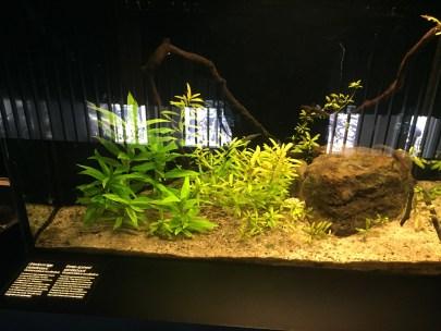 Ameisen im Terrarium (S. Thiele)