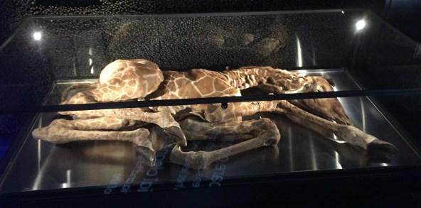 Zersetzung einer Giraffe durch Mikroorganismen (S.Thiele)