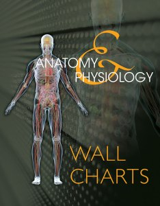 Anatomy  physiology wall charts nd edition also milady rh cengage
