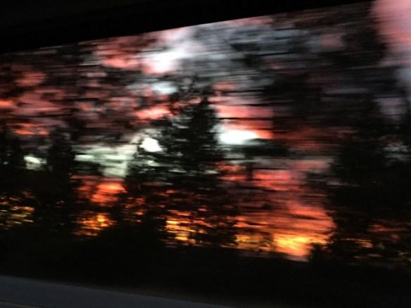 sunset trees 11-14