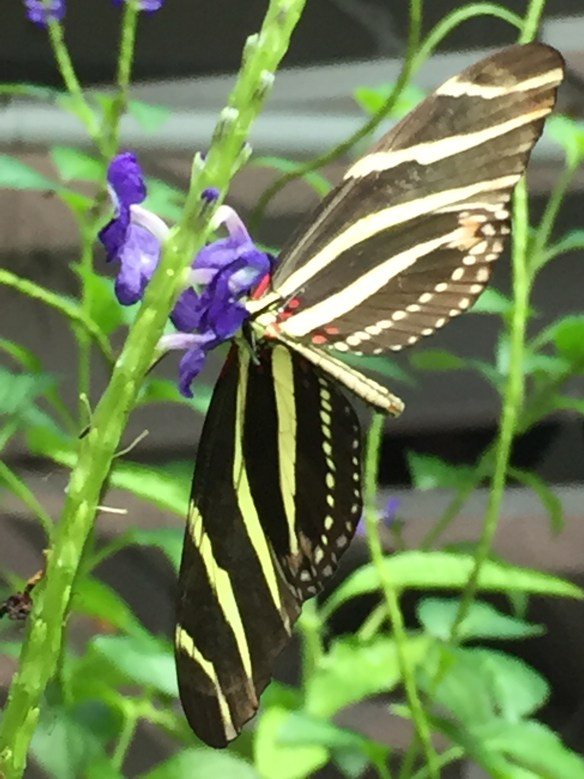 Why makes butterflies so enchanting?