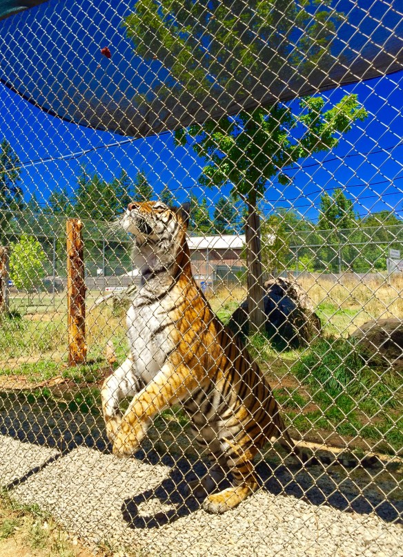 We also found Great Cats: http://www.greatcatsworldpark.com/