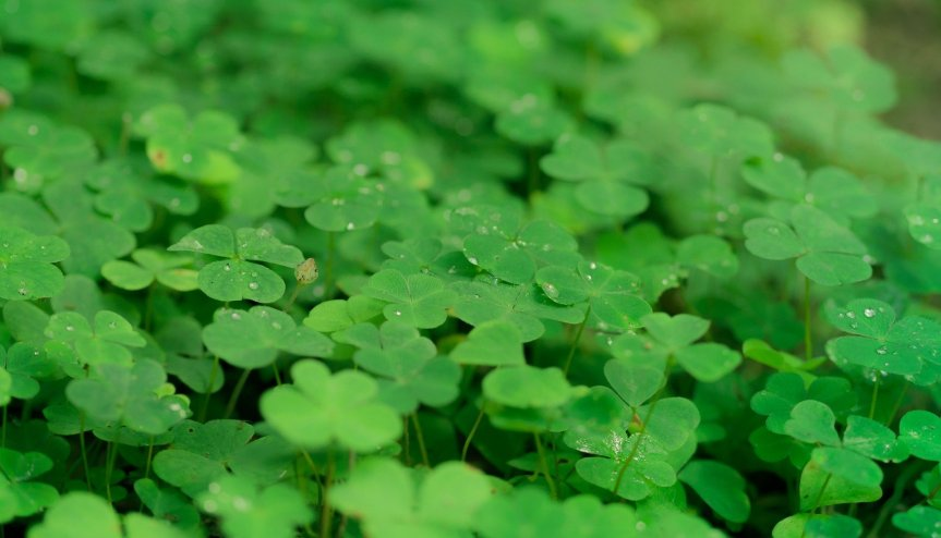 A Prayer for St. Patrick's Day