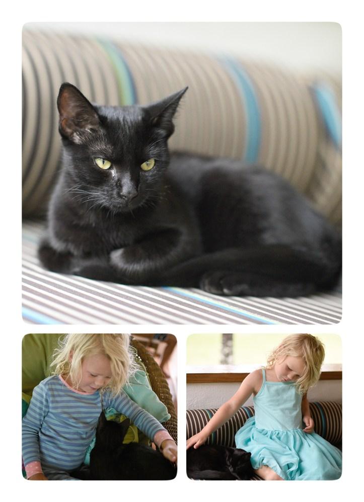 Kitten2