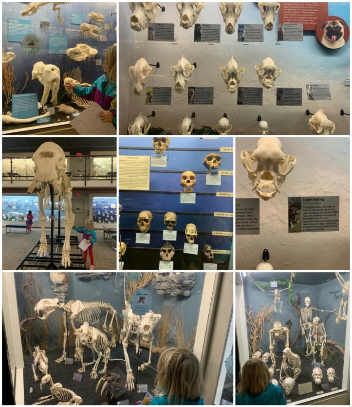 Osteology3