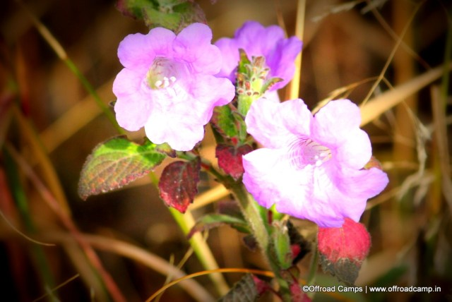 Flower in Valley, Rishikesh