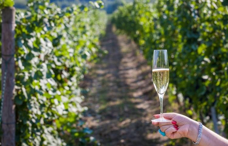 какое вино купить в Милане - винный тур в Милане