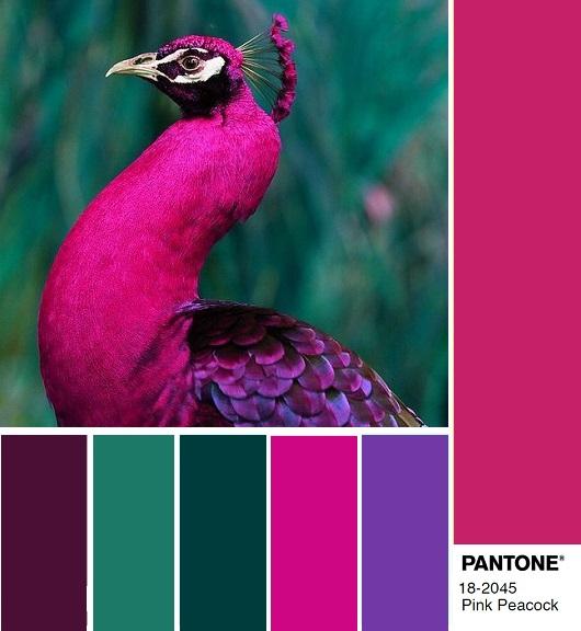 цветовые комбинации модный цвет осени 2018 Pink Peacock розовый павлин
