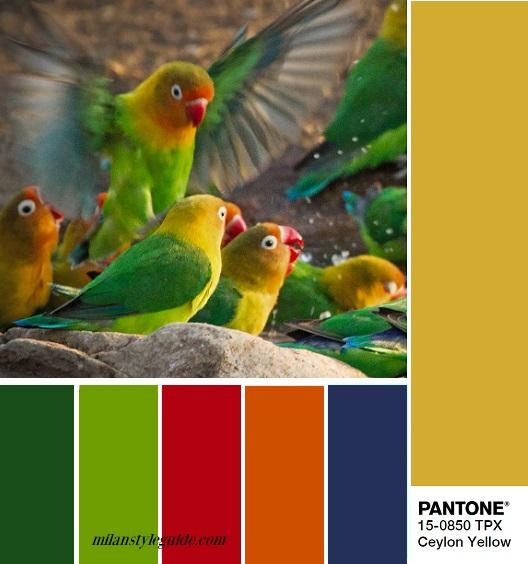 color trend Fall 2018 2019 PANTONE 15-0850 Ceylon Yellow – Цейлонский желтый combination
