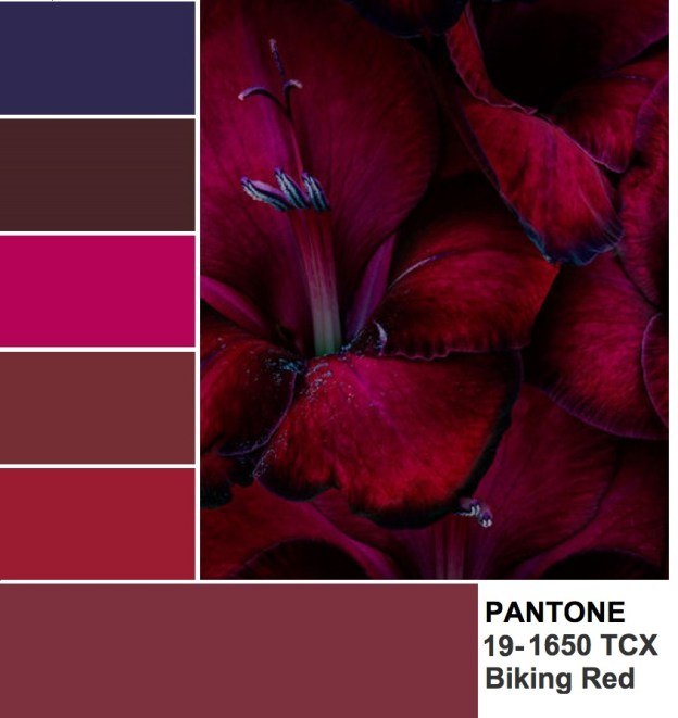 Pantone 19-1650 Biking Red color palettte