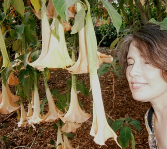 Testing the datura flowers at the gardens.