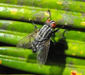 Fly-on-cycad