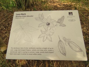 Lace bark sign
