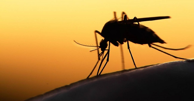 Mosquitoes inject saliva into your skin