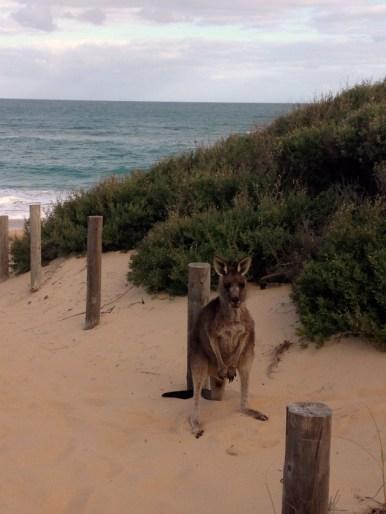 Beach Sentry
