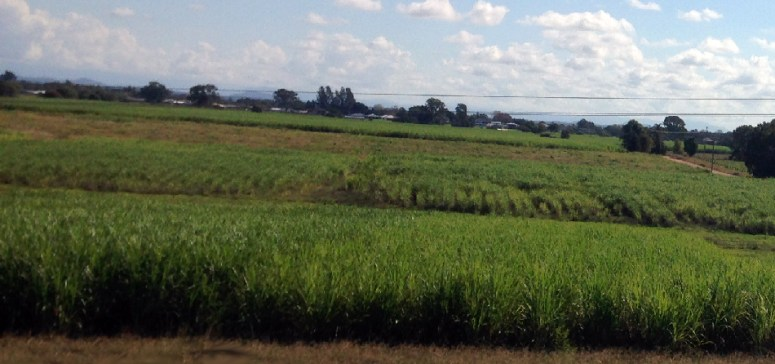 You know things can only get warmer when you see the first lot of sugarcane, Grafton NSW