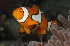 Nemo Type One