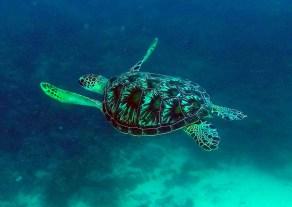 Mrs turtle