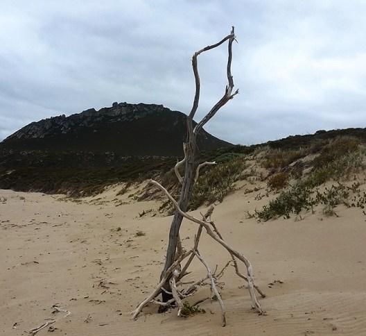 Beach Art West