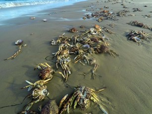 poor little crabs are beached as
