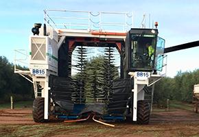 Olive Harvester