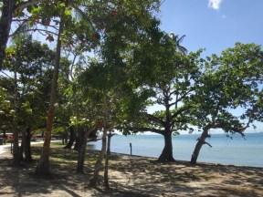 Changuaramas beach with its shady trees.