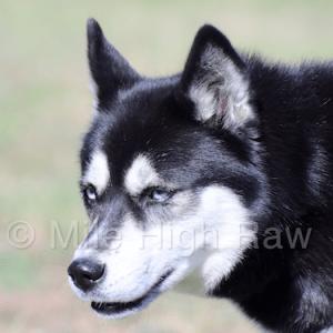 Raw Dog Food Critic