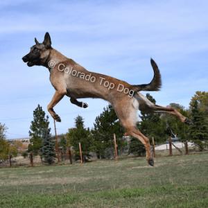 Colorado Raw Dog Food