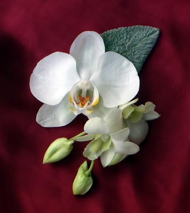 Бутониера орхидеи