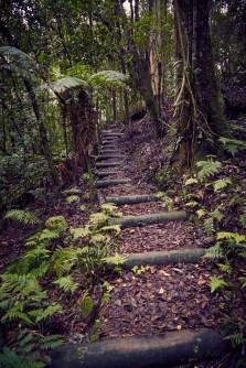 Barrington Tops National Park, Wanderweg, wandern, Weg, Regenwald, rainforest