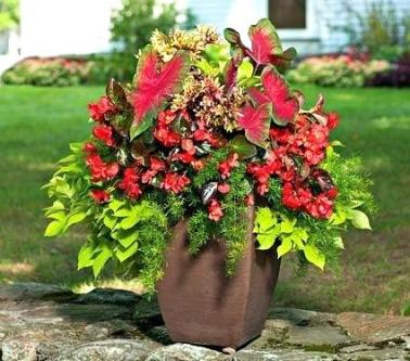 large-potted-flower-arrangements-best-25-container-flowers-ideas-on-pinterest-container-plants-planters-shade-and-caladium-garden-potted-flower-arrangements-outdoors-fall-potted-flower-arrangements