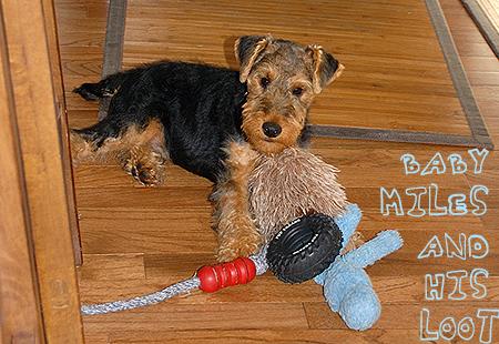 Treasured Puppy Toys