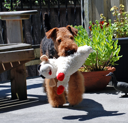 Playing With Lambchop