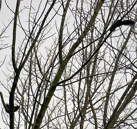 Squirrel Tree Extravaganza