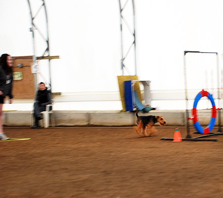 Our 2nd Agility Fun Match