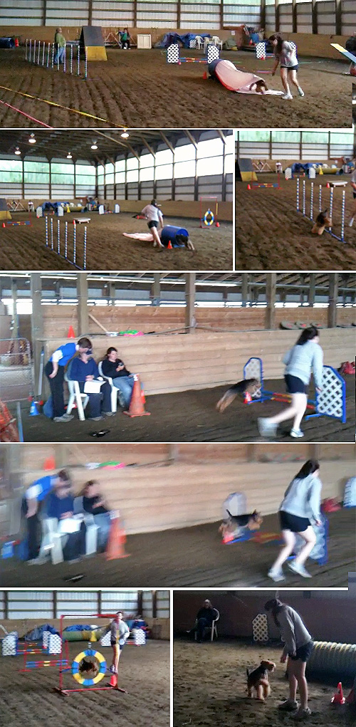 Our 3rd Agility Fun Match