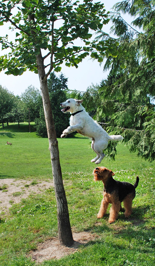 Ever seen a dog climb a tree?