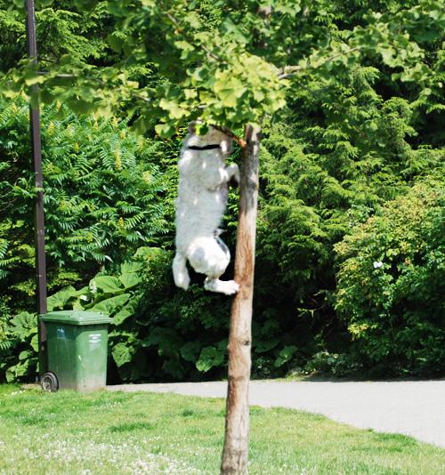 Ever seen a dog climb a tree?