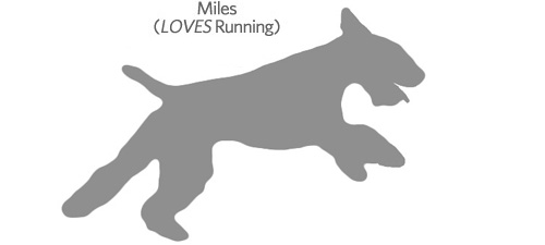 Dogs Love to Run