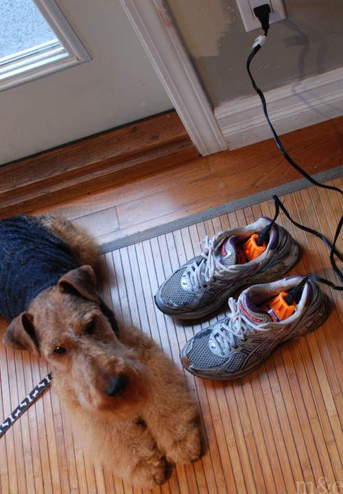 A Dog Lover's Guide to Winter Travel Gear