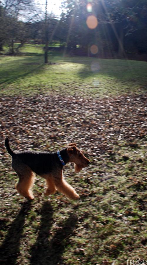 A Walk Through the Park