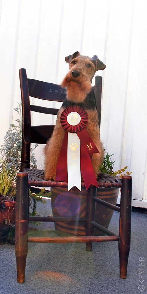 Our Fifth Agility Trial: </br>Miles is Awarded His First Agility Title!