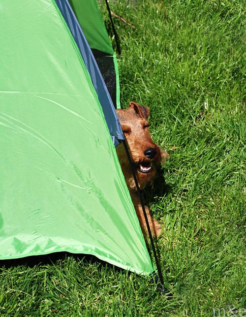 Shade Shelter